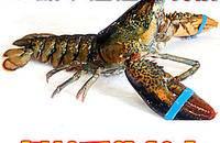 龙虾好吃,油焖大虾不适合减肥吃哦