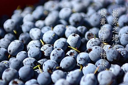 纯天然野生蓝莓果酱 农家手工自制 西点面包烘焙