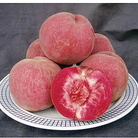 湖北新鲜水果狗血桃子天然有机绿色鲜果水蜜桃
