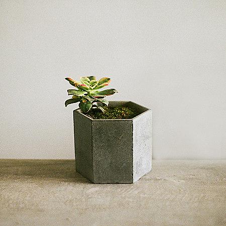 简约混凝土多肉植物花盆