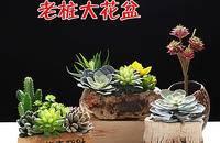 多肉植物花盆粗陶绿植物陶瓷简约个性创意小花盆
