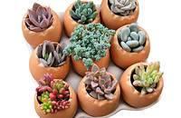 陶瓷鸡蛋花器